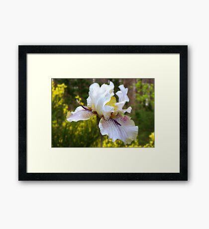 Iris in Midday Light Framed Print