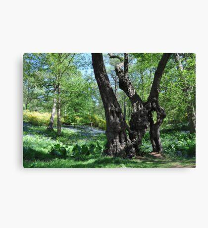 The Moirae - Windsor Great Park, England ~ 2011 Canvas Print