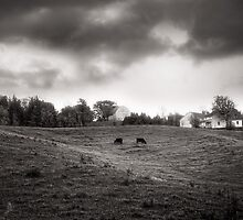 Cows at A Hill by Steve Silverman