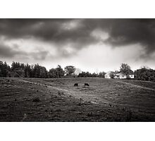 Cows at A Hill Photographic Print