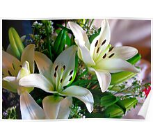 Birthday Morning Lilies - White Asiatic Lilies Poster