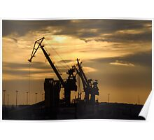Cranes in the early morning light Poster