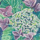 Hydrangea by acquart