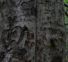 Intials etched in a tree by Isabel Bush