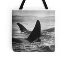 Orca Crossing - Tysfjord, Norway Tote Bag