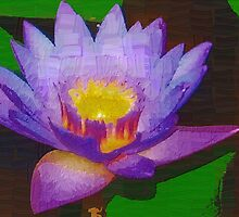 Water lily with molten center by ♥⊱ B. Randi Bailey