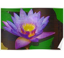 Water lily with molten center Poster