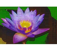 Water lily with molten center Photographic Print
