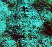 Crocodilefish by Elsa Dyason