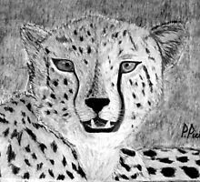 Cheetah  ~  Jagluiperd  ~  Acinonyx Jubatus  ~  Charcoal Sketch by Pieta Pieterse