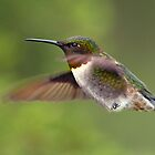 Teeny Tiny Claws / Ruby Throated Hummingbird by Gary Fairhead
