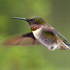 Teeny Tiny Claws / Ruby Throated Hummingbird by Gary Fairhead