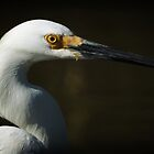 Portrait of an Egret by KatsEyePhoto