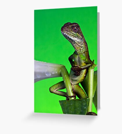 The cool dude Greeting Card