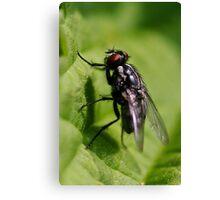 Flesh-fly Canvas Print