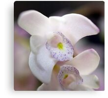 White Rock Orchid Canvas Print