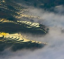 Color Rice field by jasonksleung