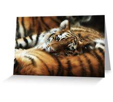 Tiger Cub Resting on Mom Greeting Card
