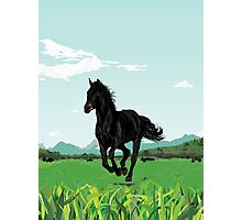 Horse In The Green Photographic Print