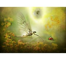 The Mayfly told the Ladybird of his Dream...! Photographic Print
