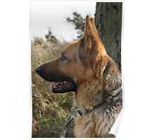 'Blaze' - German Shepherd Poster