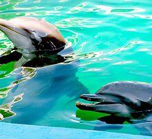 Dolphins at the aquarium by ♥⊱ B. Randi Bailey
