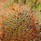 Barrel Cactus by Yannik Hay