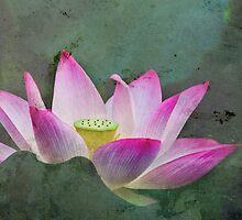 Mystical Lotus by jasonksleung