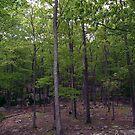 Woods near Lake Skannatati II by Sinclere