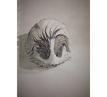 Cute Guinea Pig Ink Painting Photographic Print