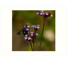 Cloak and Dagger Cuckoo Bee Art Print