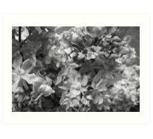 Lavender In Black & White Art Print