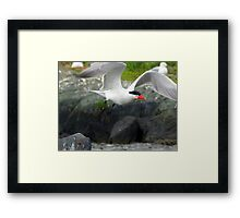 Hello Mr.Caspian  Framed Print