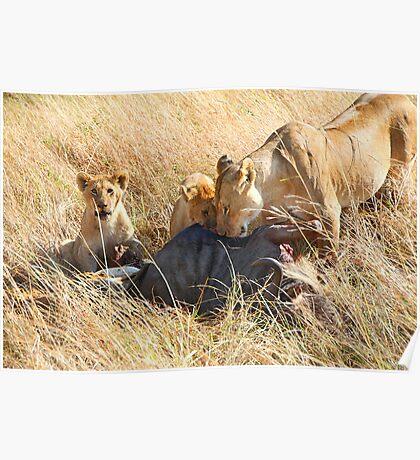 Lioness  & her Cubs at a Wildebeest Kill, Maasai Mara, Kenya Poster