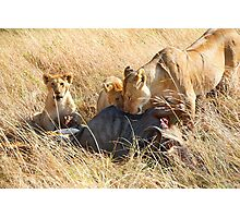 Lioness  & her Cubs at a Wildebeest Kill, Maasai Mara, Kenya Photographic Print