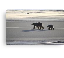 Silver Glow. Polar Bears at Sundown, Churchill, Canada  Canvas Print