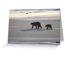 Silver Glow. Polar Bears at Sundown, Churchill, Canada  Greeting Card
