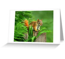 Am I Cute Or What? Greeting Card