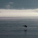 Lake Superior Fog and Canada Goose - Marathon Ontario Canada by loralea