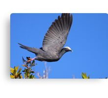 White-crowned Pigeon Canvas Print