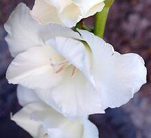 White gladiolas by ♥⊱ B. Randi Bailey