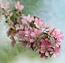 Fading Blossom by KBritt