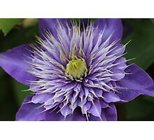 Purple Flower #1 Photographic Print