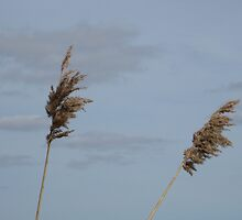 Reeds against sky by KatDoodling