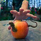 Transgenic Worm by Daniel Panea de la Poza