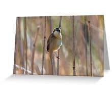 Reed Warbler Greeting Card