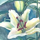 White lilium by acquart