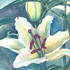 White lilium by acquart
