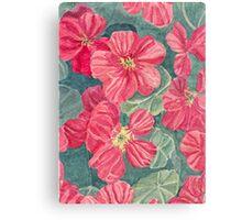 Nasturtium flowers Canvas Print