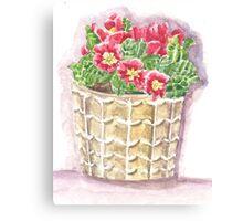 Jar primrose Canvas Print